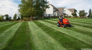 The Most effective Way To Mow A Lawn Is Not To Mow It At All