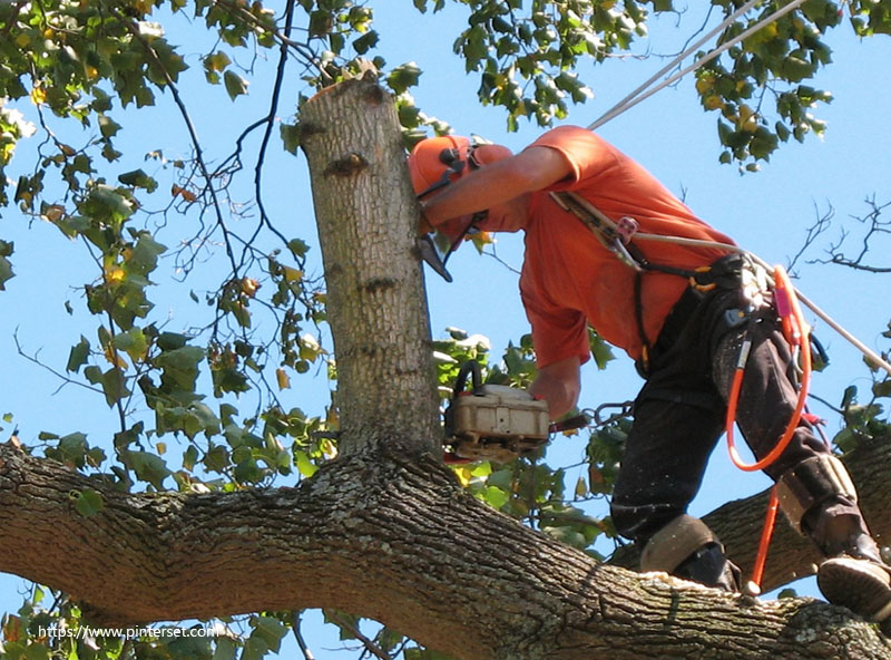 Why A Professional Is Needed For Tree Removal